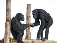 Visita al centro de Primates Rainfer. (Madrid)